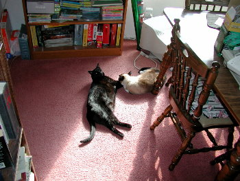 riley and phoebe laying in the sun
